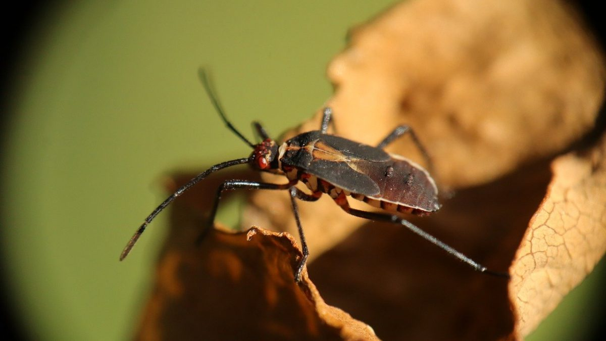 Aardwolf Pestkare- Providing The Best Bed Bugs Treatment