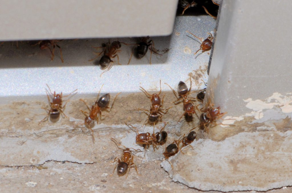 What do you think is a Better Option – DIY or a Professional Pest Control Service?