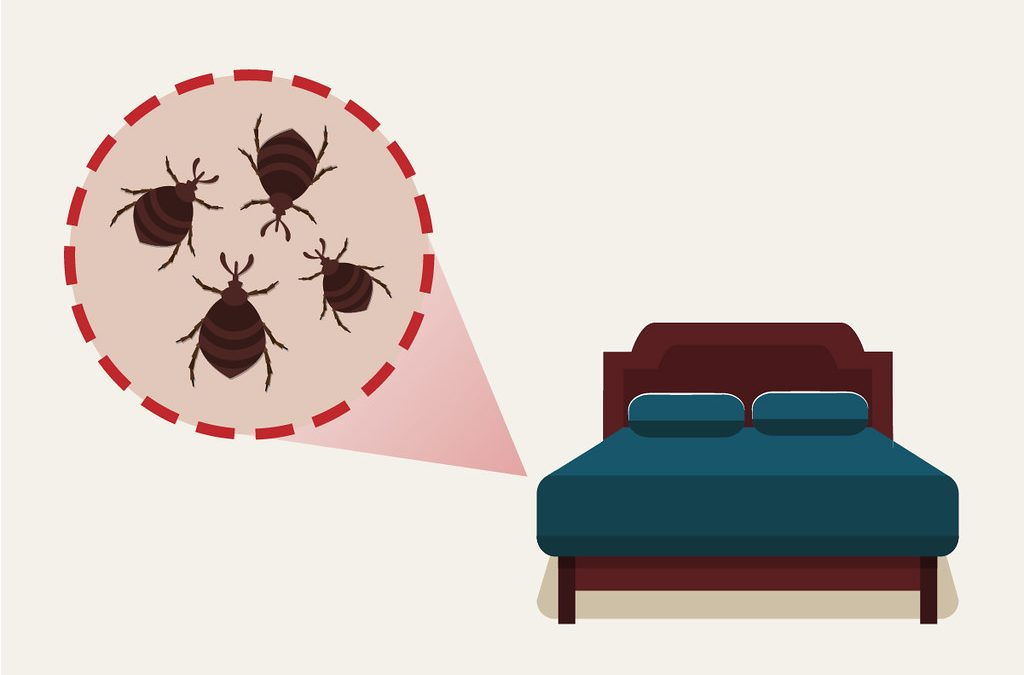 Tips on how you can protect your house from pests