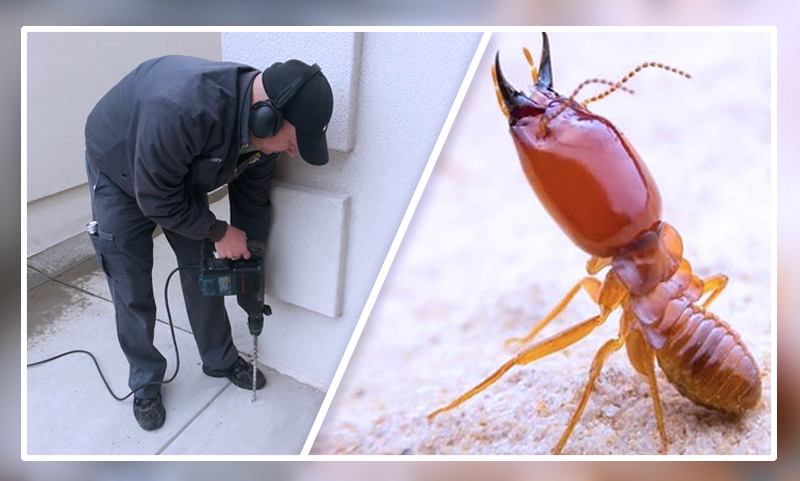 Termite Control: How to Tackle the Pest in Chesapeake, VA